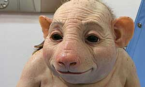 नर सूअर और मादा चिंपैंजी के मिलन से जन्मा मानव!